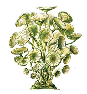 Havuzdaki-yosunlarla-mucadele-1
