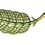 Havuzdaki-yosunlarla-mucadele