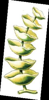Havuzdaki-yosunlarla-mucadele-2