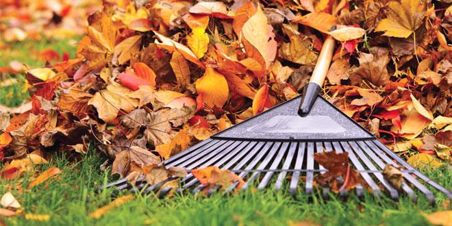 Sonbaharda Bahçe İşleri